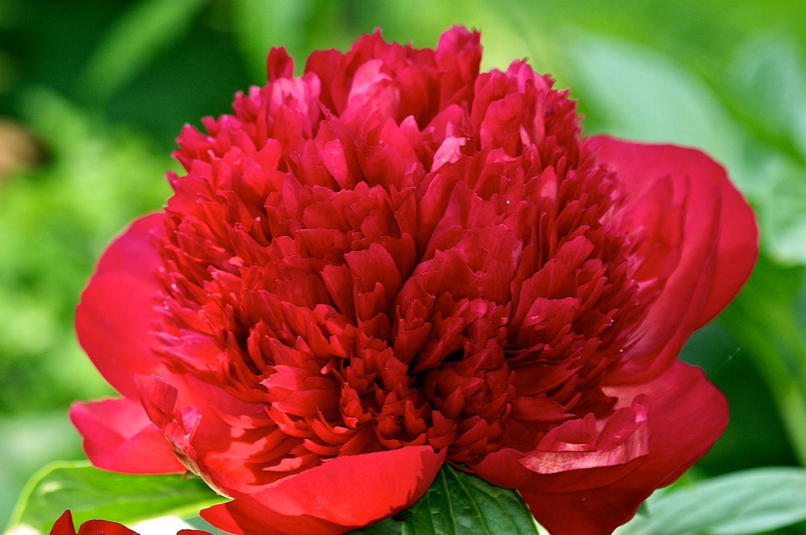 route des fleurs liste des jardins priv s ouverts au public samedi le 28 juin 2014 comit d. Black Bedroom Furniture Sets. Home Design Ideas